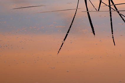 Close-ups_sunset_reflections_Kerry_Drager