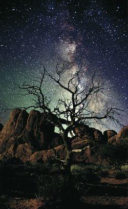Lone Tree - Arthur Rosch