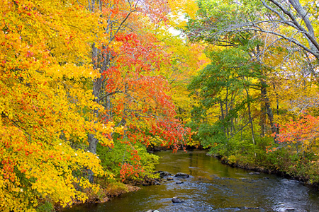 Fall_Color_Photo_Jim_Zuckerman