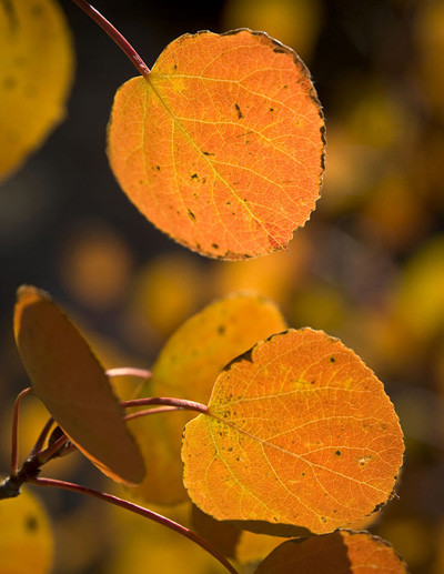 Fall_Leaf_Photography_Rob_Sheppard