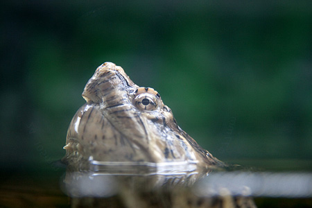 Aquarium_photography_Jim_Zuckerman