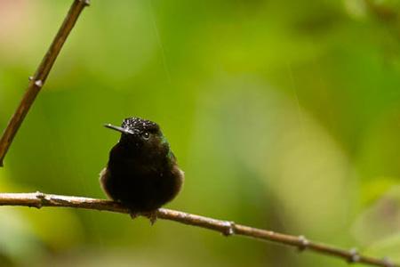 Rob_Sheppard_Costa_Rica_hummingbird