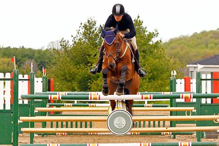 QA_April_Horse