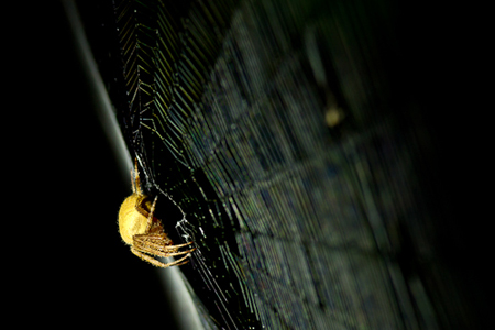 Orbweaver_Night_Rob_Sheppard_Photo