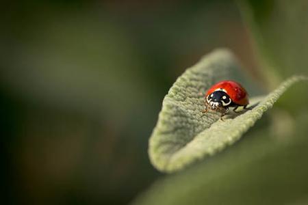 Ladybug-Macro-2-Rob-Sheppard