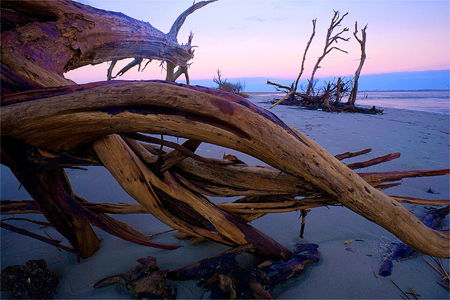 Jim_Zuckerman_Driftwood