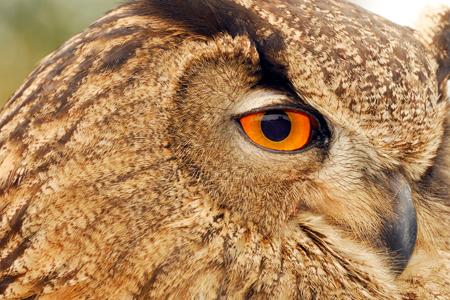 TIP_DEC_2_owl