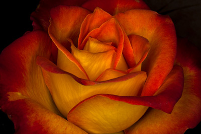 Flower-photo-Jim-Zuckerman