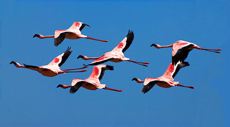 Birds_in_Flight_Photo_Jim_Zuckerman