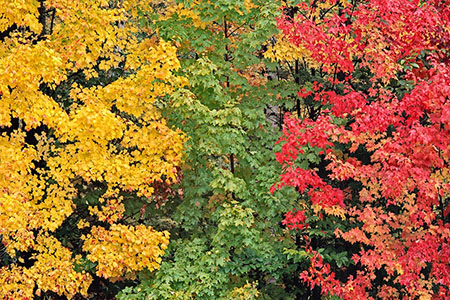 Fall-Color-Tony-Sweet